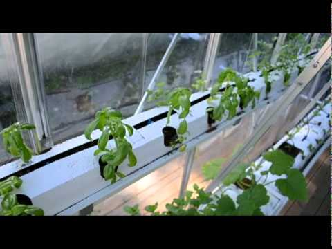 Urban agriculture project week 7.dv