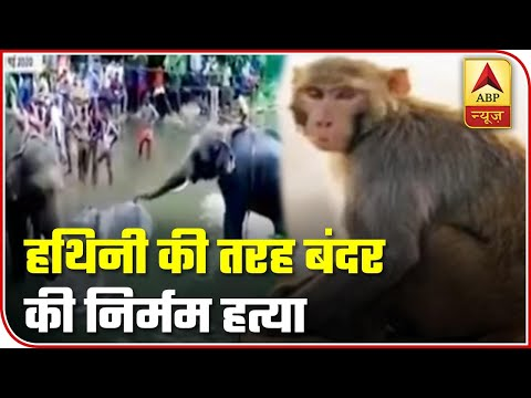 People Hang Monkey To Death In Telangana's Khammam District | ABP News
