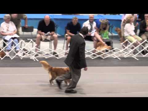 2013 Canadian Toller Specialty Best of Breed (pre cut video 2)