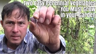 Two Easy Perennial Vegetables You Must Grow in Your Garden