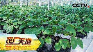 《农广天地》 20190620 工科男的循环农业| CCTV农业