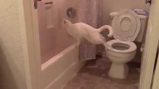 Кошак-обосрак