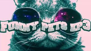 Веселые домашние животные коты ep3   Funny pets cats ep3