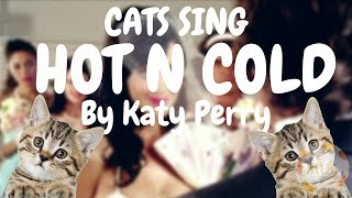 Cats Sing Hot N Cold by Katy Perry | Cats Singing Song