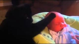 Кошка успокаивает плачущего ребенка! Cat soothes crying baby!