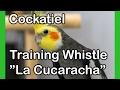 Cockatiel songs - La Cucaracha - Medium