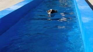 久々に、ビッグウッドさんのプールに行ってきました。プイネ上手に泳ぐ...