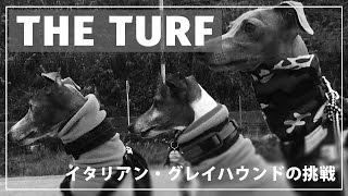 THE TURF「イタリアン・グレイハウンドの挑戦」予告編 主演:シャーリー...