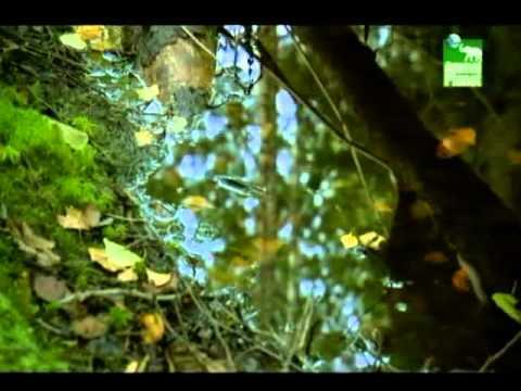 Чудеса при съемках фильма о святителе Иоанне Шанхайском