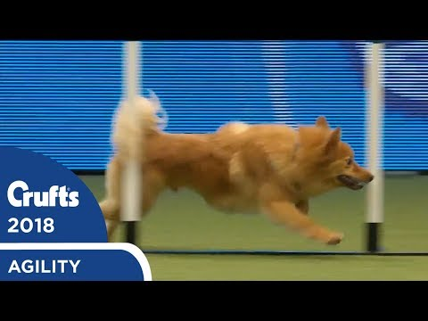 Agility - Championship Round 2 (Agility) Part 3 | Crufts 2018