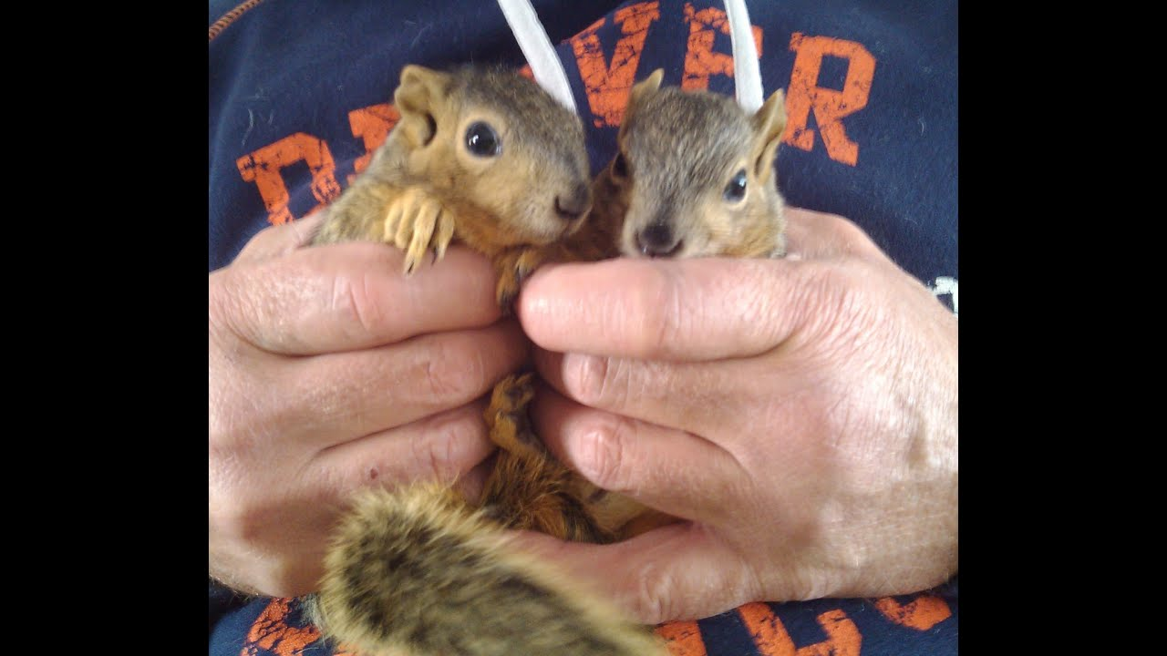 baby squirrel project day