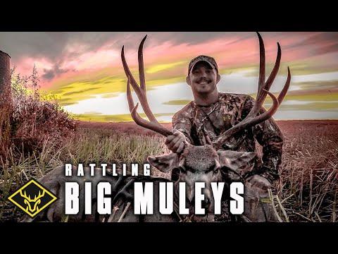 Rattling In A Mule Deer!