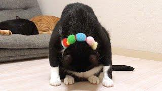 だまし絵みたいになった猫
