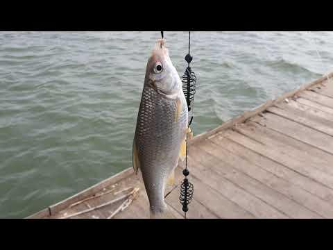 Рыбалка днестр маяки 16.03.2021 отдых природа одесса