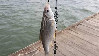 Рыбалка днестр маяки 16 03 2021 отдых природа одесса