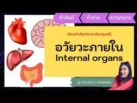 อวัยวะภายในร่างกาย   Internal Organs   คำศัพท์ภาษาอังกฤษ