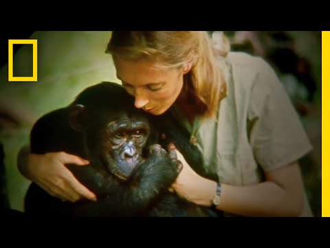 Official Film Trailer: JANE | National Geographic