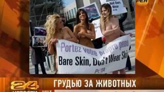 PETA защитит животных порносайтом