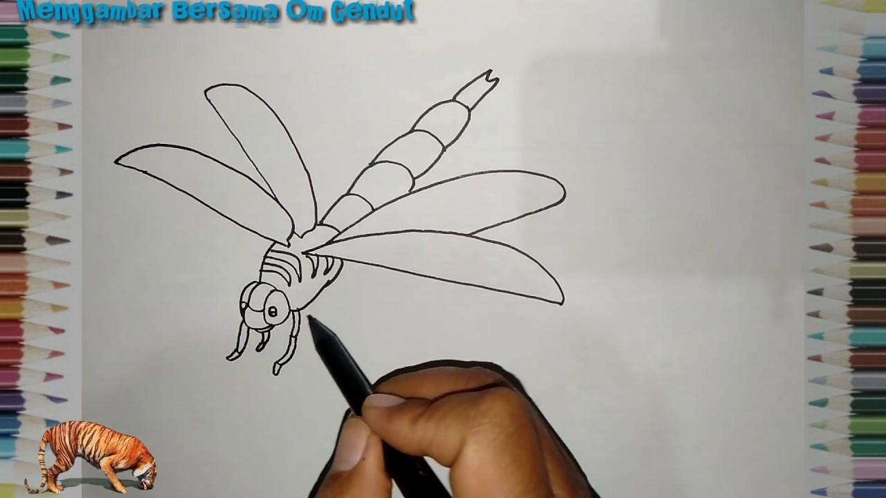 Cara Menggambar Hewan Capung