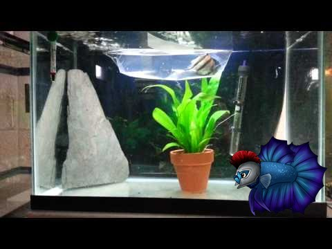 Angelfish Breeding Tank Setup - YouTube