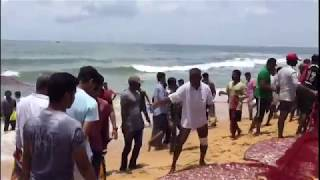 Thousands of fish seen jumped out of the Sea in Mangalore