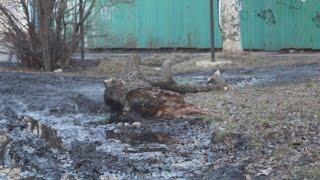 """Работа КП """"Стройспецкомплект"""" в Горловке"""