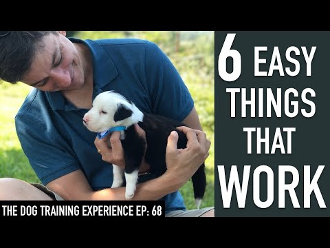 6 Things That Will Make it EASY to Train Your Dog!
