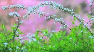 僕の旅日記 西尾まり 検索動画 27