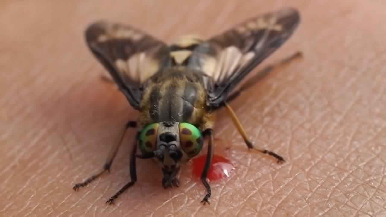 اكثر 10 حشرات مزعجة