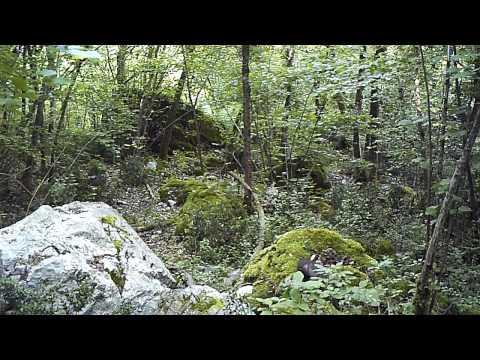 Martre des pins martes martes youtube - Martre des pins ...