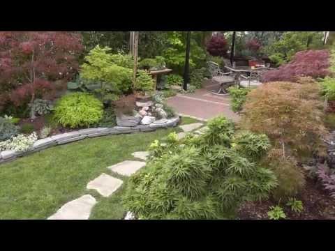 The Summer Garden - Japanese Maple Garden - Back yard tour