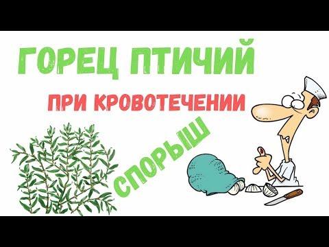 Горец птичий: лекарственное растение, применение - Аптека fito.ua