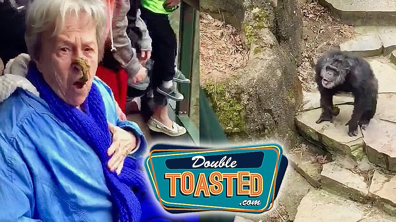 Monkey Throws Poop At Grandma Video Double Toasted Funny Podcast