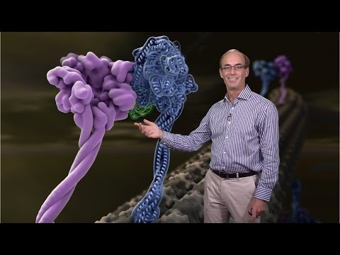 Ron Vale (UCSF, HHMI) 3: Molecular Motor Proteins: Regulation of Mammalian Dynein