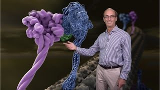ron vale ucsf hhmi 3 molecular motor proteins regulation of mammalian dynein