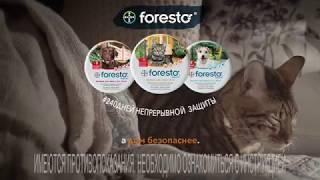 Ошейник Foresto для кошек. Защита от блох и клещей на весь дачный сезон!