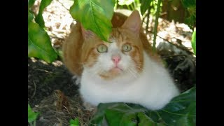 Problem solved! How t๐ stop cats using your garden soil as a toilet, without using chemicals!
