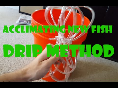 How To Drip Acclimate Fish