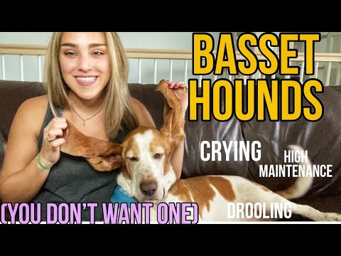 BASSET HOUNDS: 10 Reasons Why You DO NOT Want One