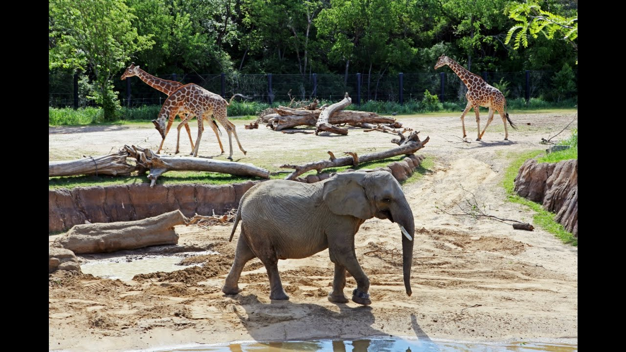 zoos are good or not Zoos have several different ways of managing the animal populations, such as moves between zoos, contraception, sale of excess animals and euthanization (culling) contraception can be effective, but may also have health repercussions and can be difficult (or even impossible) to reverse in some animals.