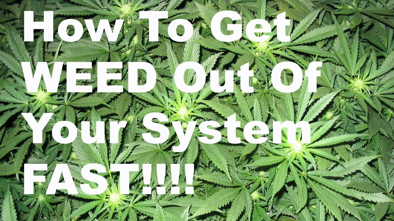Can bleach clean your system of weed