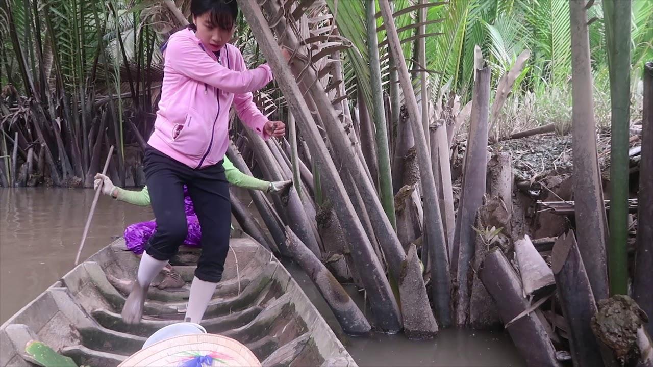 Đi Bắt Ốc Len Về Xào Lá Cách Nước Cốt Dừa – Em Gái Quê – Bến Tre