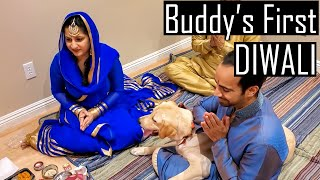 My Labrador Puppy Celebrating His First DIWALI with Family | He Gets Super Excited | Furry Friend