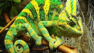 Видео для детей ЭДЕМСКИЙ САД Знакомимся с природой(«Эдемский сад» - это буйство красок, солнечные лучи, пронзающие зеленые кроны, манящие голоса тропических..., 2016-04-27T08:50:25.000Z)