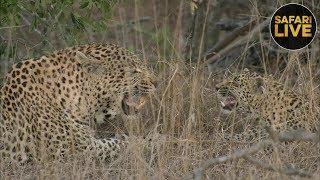 safariLIVE - Sunrise Safari - August 21, 2018