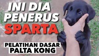 PENERUS SPARTA - MELATIH PALTA KONG!