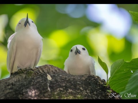 Kara Sun presenting wildlife of the seychelles,Part 3 (Praslin,Aride,Curieuse)