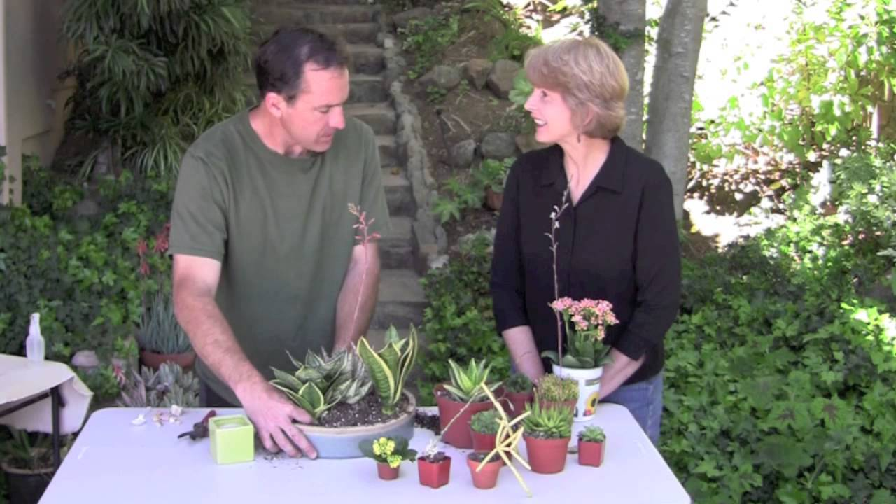 Make A Low Light Succulent Dish Garden For Indoors Youtube