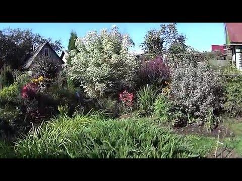 Видео: Сад, который очаровывает и вдохновляет