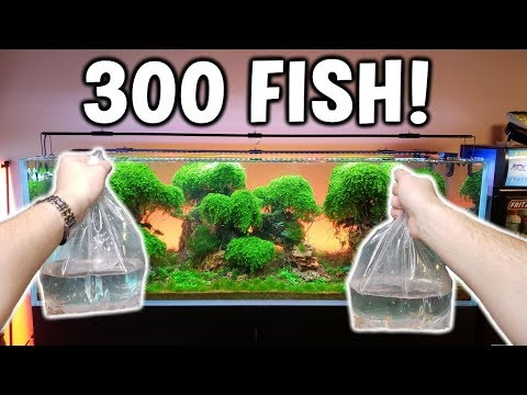 Adding 300 FISH! To Ancient Gardens Planted Aquarium